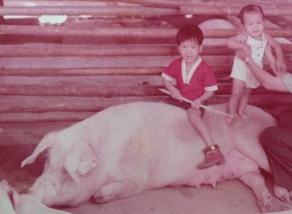 Fazenda de porcos